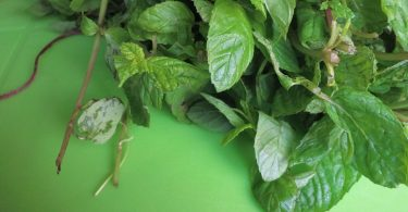 A bunch of mint leaves on table