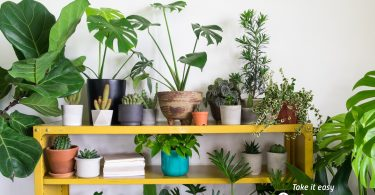 A collection of indoor plants
