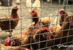 Bird Flu In India: Should You Worry? - PharmEasy