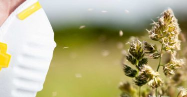 Seasonal Allergies Home Remedies
